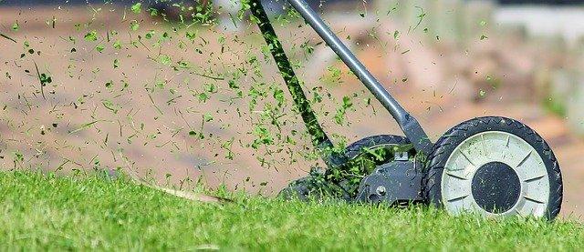 jaki rodzaj trawy do ogrodu (2)