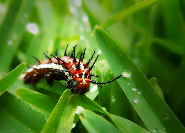 szkodniki roślin jak walczyć (2)