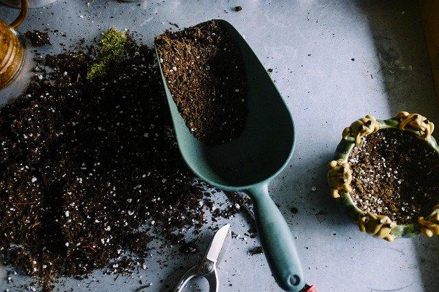 jakie rosliny sadzic na wiosne (2)