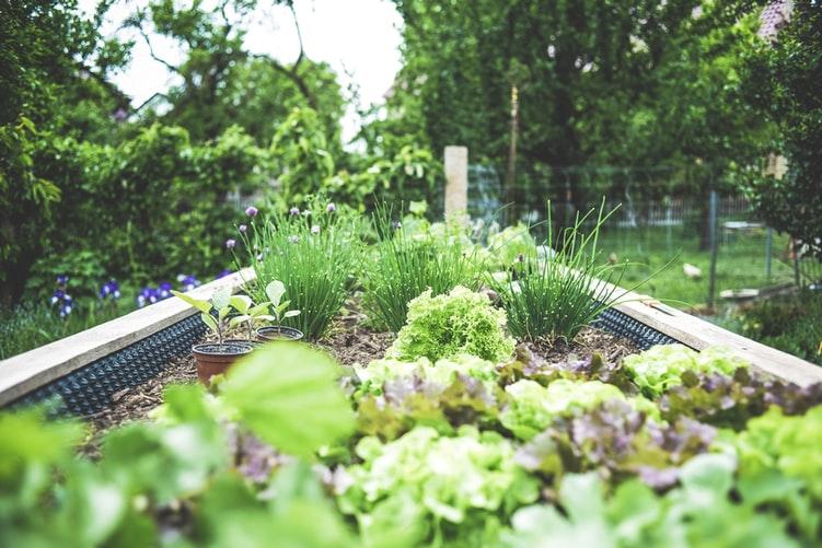 kiedy rozpocząć zakładanie ogrodu
