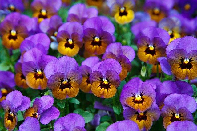 rośliny do ogrodu łatwe w uprawie (1)