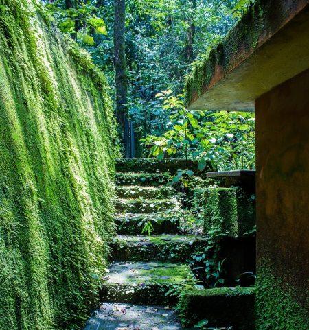 Renowacja ogrodów krakó